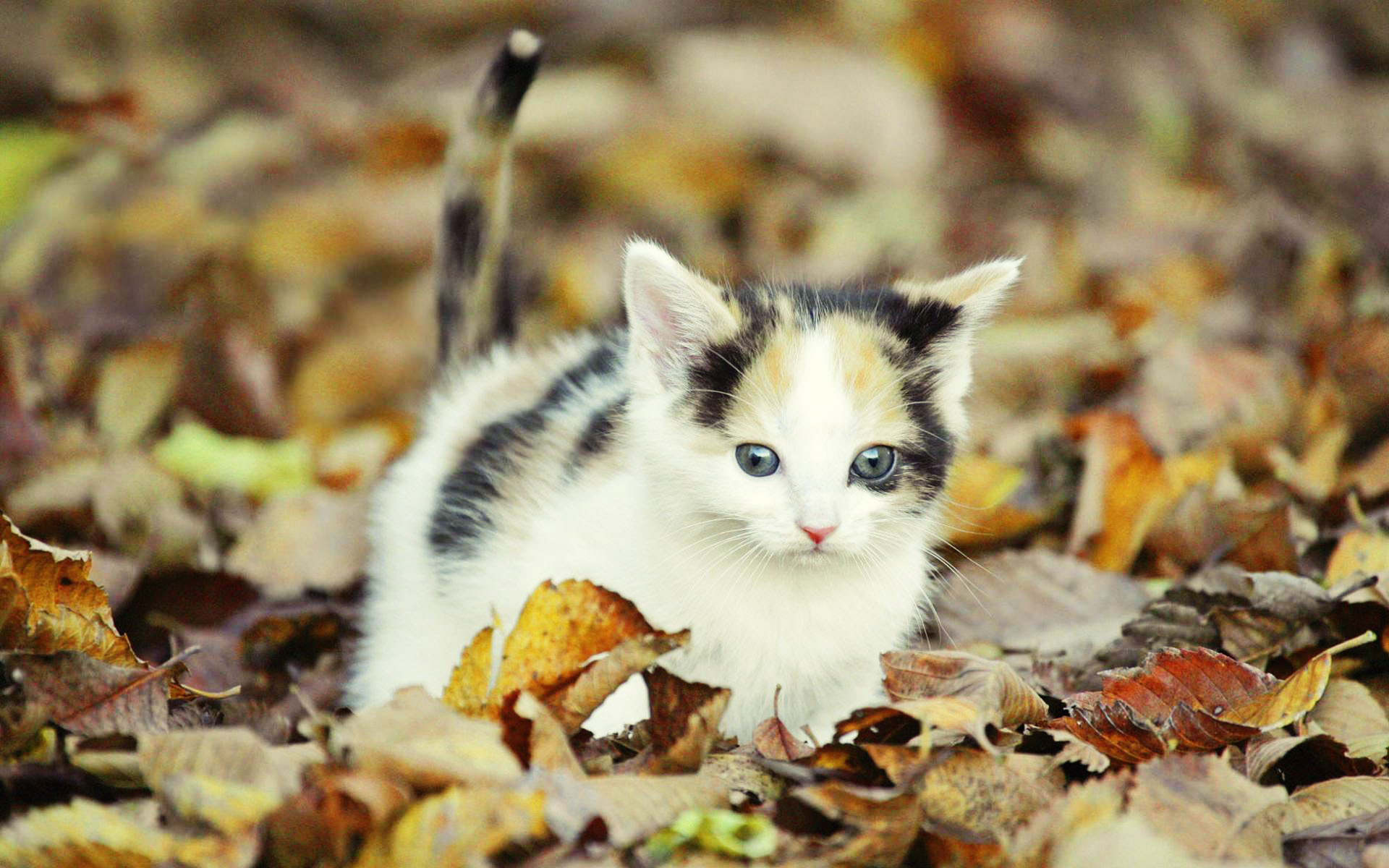 عکس های بچه گربه های ناز